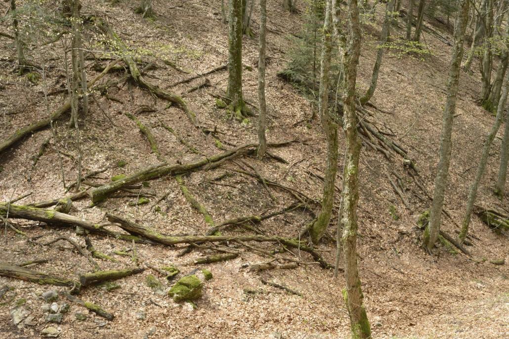 © guillaume bonnel, observatoire photographique de la forêt de Saoù, 2013.